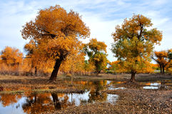 The trees in autumn royalty free stock photo