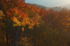 Trees in autumn light stock photos