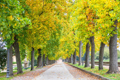 Trees during the autumn in Lucca, Italy Stock Photos