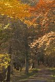 Autumn trees in the New Forest Hampshire royalty free stock image