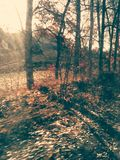 Trees. Autumn nice trees near the road Stock Photos