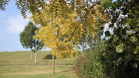 Trees in autumn. A number of trees with blue sky Stock Images