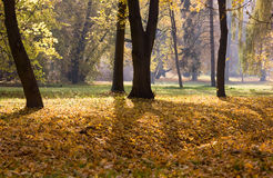 Trees in autumn park. Fall landscape - trees in autumn park stock photo
