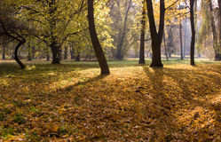 Trees in autumn park Royalty Free Stock Image