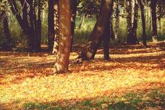 Trees in Autumn Park Stock Image