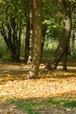 Trees in Autumn Park Royalty Free Stock Images