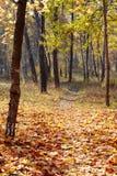 Trees in autumn park Stock Photos