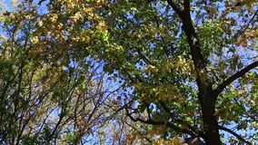 Trees in autumn park. Day stock footage