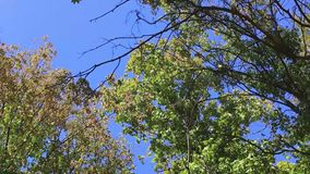 Trees in autumn park. Day stock video footage