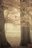 Trees in autumn park foggy day. Nature and environment. Forest autumnal trees. Landscape in the foggy hazy day Stock Photography