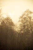 Trees in autumn park foggy day. Nature and environment. Forest autumnal trees. Landscape in the foggy hazy day Royalty Free Stock Photo
