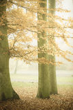 Trees in autumn park foggy day. Nature and environment. Forest autumnal trees. Landscape in the foggy hazy day Stock Photo