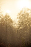 Trees in autumn park foggy day. Nature and environment. Forest autumnal trees. Landscape in the foggy hazy day Royalty Free Stock Image