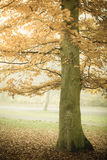 Trees in autumn park foggy day Royalty Free Stock Photos