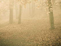 Trees in autumn park foggy day. Nature and environment. Forest autumnal trees. Landscape in the foggy hazy day Stock Photos