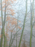 Trees in autumn park foggy day. Nature and environment. Forest autumnal trees. Landscape in the foggy hazy day Stock Images