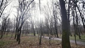 Trees in the autumn park. sun background.  stock video footage