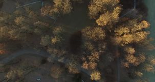 Trees in autumn park. View from top aerial stock video