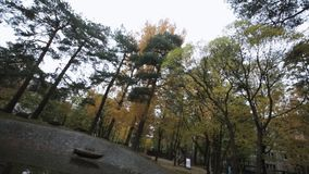 Trees in autumn park. Yellow, green, gold leaf. Not working fountain. Panorama. Nature stock video footage