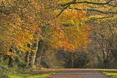 Autumn trees on Southampton Common royalty free stock photography