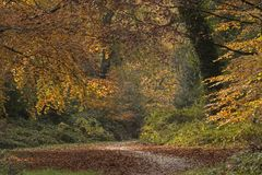Autumn trees on Southampton Common royalty free stock photo
