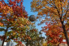 Trees in autumn in the Queen Elizabeth Olympic Park , London, stock photos