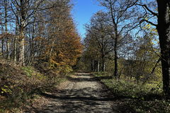 Trees, autumn scenery in the vicinity of Hartmanice, Czech republic Stock Photography