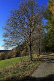 Trees, autumn scenery in the vicinity of Hartmanice, Czech republic Stock Image