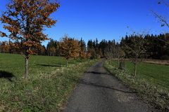 Trees, autumn scenery in the vicinity of Hartmanice, Czech republic Royalty Free Stock Image