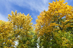 Trees in autumn season Royalty Free Stock Images