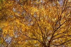 The Trees, autumn season Royalty Free Stock Image