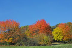 Trees in autumn. Some trees in autumn, blue cloudless sky Royalty Free Stock Images