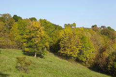 Trees in autumn. Some trees and bushes in fall with yellow and green leaves photographed in sunshine and blue sky Stock Photography