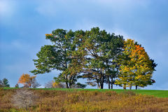 Trees in Autumn Royalty Free Stock Images
