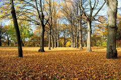 Trees in autumn Royalty Free Stock Photos