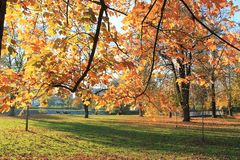 Trees in Autumn. Trees in the Park in Autumn Stock Photography