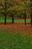 Trees in Autumnal park. Scenic view of trees in park with Autumnal leaves on ground stock photography