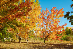The trees autumnal scenery Royalty Free Stock Photo