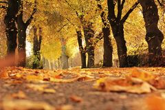 Trees, Avenue, Autumn, Away, Mood Royalty Free Stock Images