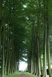 Trees avenue. Royalty Free Stock Photos