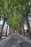 Trees on avenue in Sant`Agata DE Goti, in italy Stock Photos