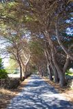 Trees avenue Royalty Free Stock Photography