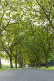 Trees 8 Stock Photo