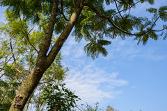 Trees in azure sky at sunny noon Royalty Free Stock Images