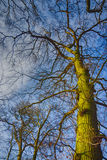 Trees with a backdrop of blue sky Stock Photo