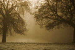Trees Background. Sepia trees in morning light Royalty Free Stock Photo