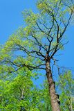 Trees on a background of blue sky Stock Photography