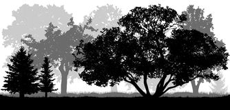 Trees background, nature, park forest, silhouettes vector illustration