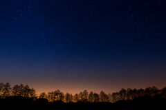 Trees on  background of the night starry sky. Trees on a background of the night starry sky Stock Photos