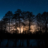 Trees on  background of the night starry sky Stock Photos